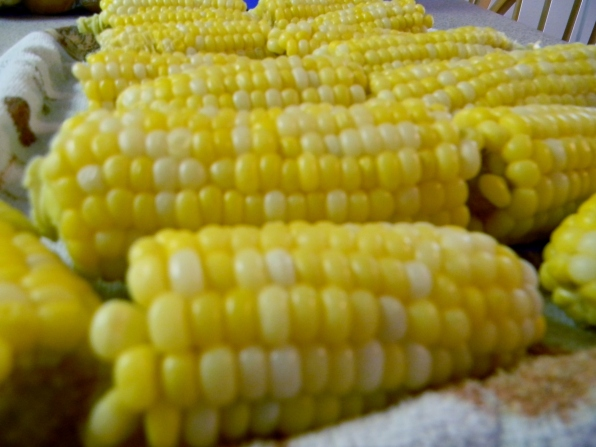 prepared corn cobs