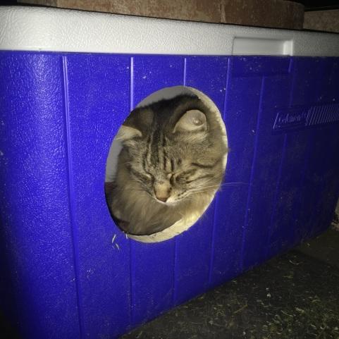 Joy's Cat Condos